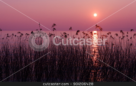 Purple sunset stock photo, Purple sunset over lake with reed silhouettes by Natalia Macheda