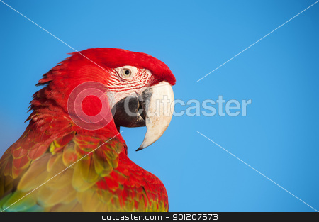 Macaw portrait. stock photo, Macaw portrait with copy space. by Pablo Caridad