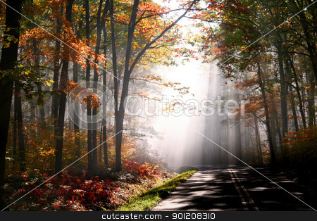 Morning autumn day stock photo, Early morning scene in Allegheny national forest  by Sreedhar Yedlapati