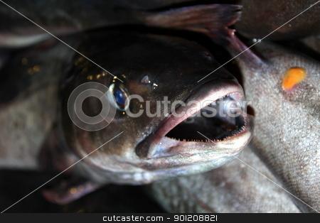 Fish Catch stock photo, Full box of fresh catched fish close up by Henrik Lehnerer