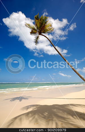 Palm on exotic beach  stock photo, Palm on exotic beach. Dominican Republic. by Lars Christensen