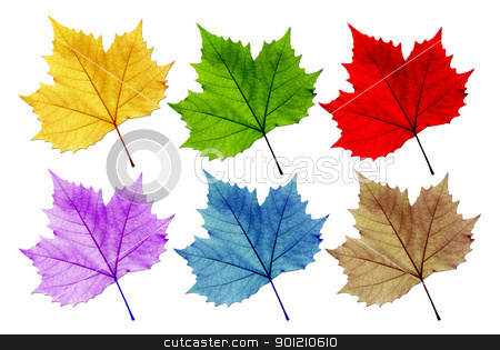Leaves vary in color   stock photo, Leaves vary in color. White background. Distinguished, with the leaves. by photomyheart