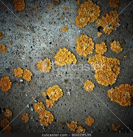 Lichens on stone texture, closeup stock photo, Lichens on stone texture, closeup by pashabo