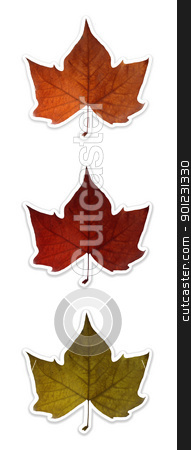 Autumn leaves isolated over white with clipping path stock photo, Fall leaf in 3 colors isolated over white. Each colored flower has it's own named clipping path, so you can easily cut them out and place over the top of a design. by Cienpies Design