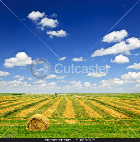 Wheat farm field at harvest stock photo, Harvested wheat on farm field with hay bale in Saskatchewan, Canada by Elena Elisseeva