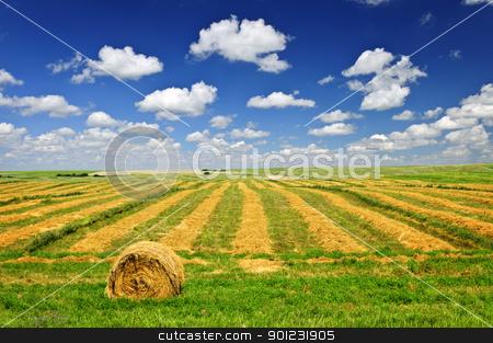 Wheat farm field at harvest stock photo, Harvested wheat on farm field with hay bale in Saskatchewan, Canada by Elena Elisseeva