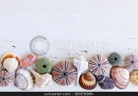 Background with seashells stock photo, Border of Mediterranean seashells, urchins and rocks on painted wood background by Elena Elisseeva