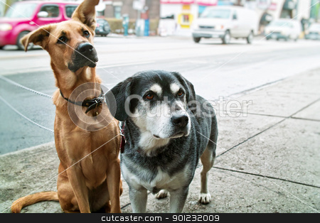 Two dogs on sidewalk stock photo, Two pet dogs waiting on sidewalk on city street by Elena Elisseeva