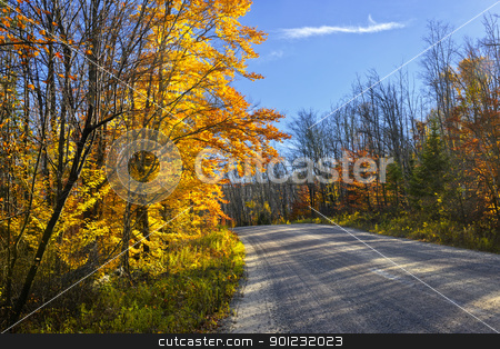Fall forest road stock photo, Gravel road through colorful fall forest in Ontario, Canada by Elena Elisseeva