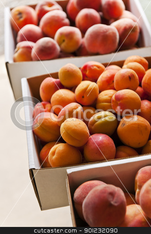 Fruit for sale stock photo, Fresh peaches and apricots fruits for sale on farmers market by Elena Elisseeva