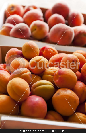 Fruit for sale stock photo, Fresh apricots and peaches fruits for sale at a farmers market by Elena Elisseeva