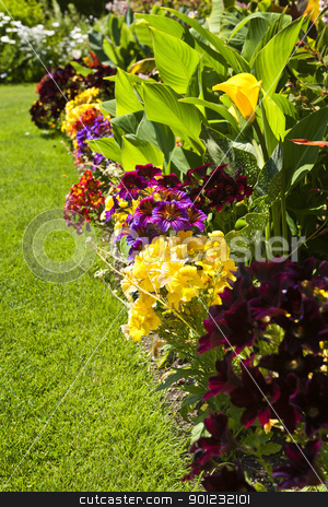 Colorful garden flowers stock photo, Beautiful bright colorful flower garden with various flowers by Elena Elisseeva