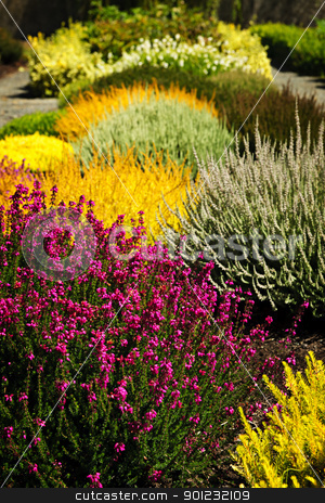 Colorful garden flowers stock photo, Beautiful colorful flower garden with various flowers by Elena Elisseeva