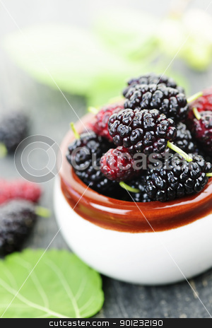 Fresh mulberries stock photo, Ripe mulberry berries in a bowl, freshly picked by Elena Elisseeva
