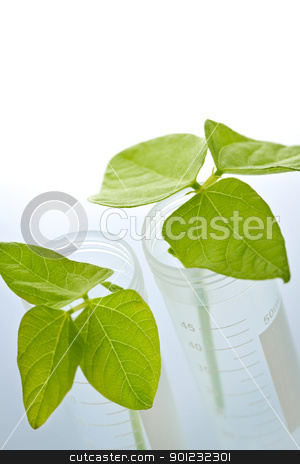 GM plant seedlings in test tubes stock photo, Genetically modified plant seedlings in two test tubes by Elena Elisseeva