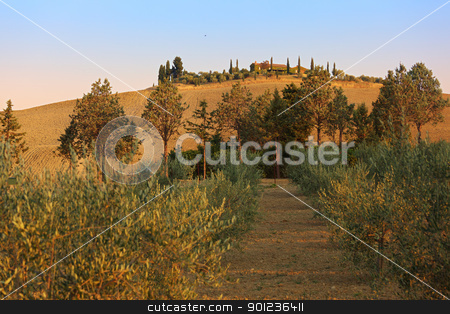 Tuscany landscape stock photo, Sunrise in Val d'Orcia, view on a typical agricultural hill with villa and field by Natalia Macheda
