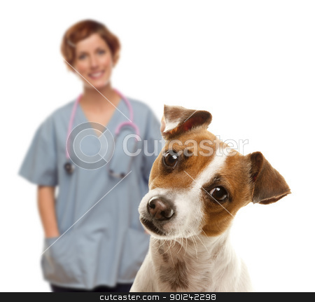 Jack Russell Terrier and Female Veterinarian Behind stock photo, Adorable Jack Russell Terrier and Female Veterinarian Behind Isolated on a White Background. by Andy Dean