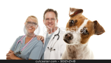 Jack Russell Terrier and Veterinarians Behind stock photo, Adorable Jack Russell Terrier and Veterinarians Behind Isolated on a White Background. by Andy Dean