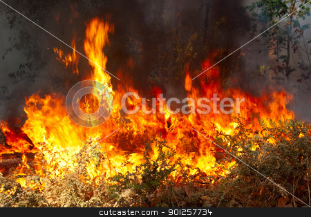 Forest fire stock photo, Big fire of trees in a wood with a smoke and a flame by Imaster