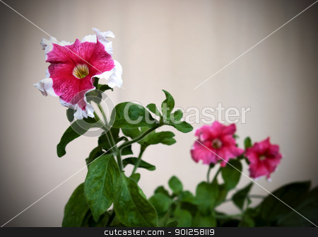 Old photo beautiful flower stock photo, Old photo three red beautiful flower by Imaster