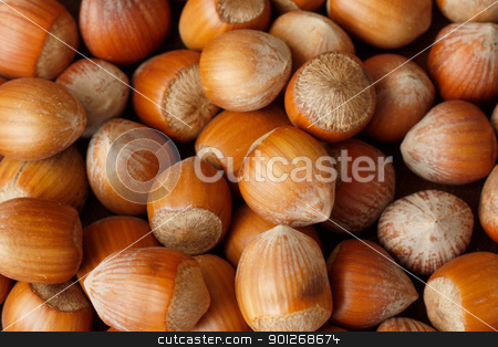 Hazelnuts stock photo, Hazelnuts by Lasse Kristensen@gmail.com