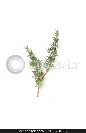 Thyme stock photo, Thyme isolated on a white bg by Lasse Kristensen@gmail.com