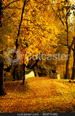 Autumn leaves stock photo, Polish golden autumn by johnnychaos