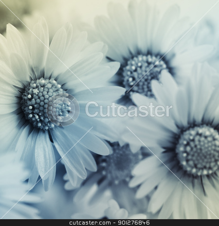daisy flower stock photo, background of the flowers. Square shot.    by klenova