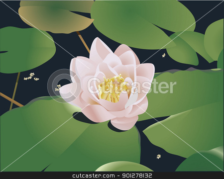water lilly Illustration stock vector clipart, A beautiful realistic illustration of a lily or lotus and lily ads floating on a pond. No meshes used  by Christos Georghiou