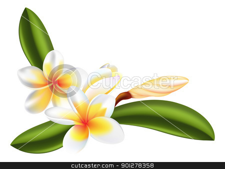 frangipani or plumeria flower stock vector clipart, illustration of beautiful frangipani or plumeria flowers by Christos Georghiou