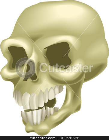 skull illustration stock vector clipart, A human skull. No meshes used.  by Christos Georghiou