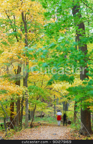 Autumn forest stock photo, Autumn forest with yellow maple trees and colorful foliage in hiking trail. by rabbit75_cut