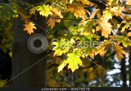 Autumn fall leaves stock photo, A bunch of fall leaves by klenova
