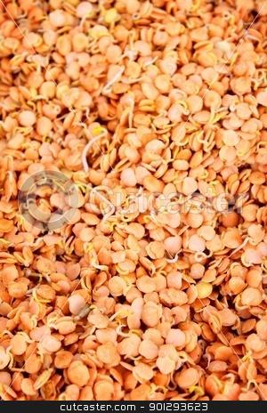 Lentil Sprouts stock photo, Background an texture image of lentil sprouts by Henrik Lehnerer