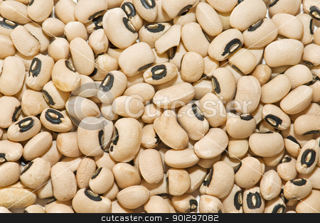 Jewish ecological stock photo, showing newly harvested beans texture