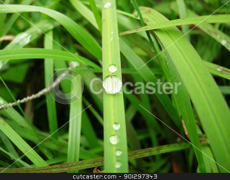 Water Drop stock photo, A water drop on a grass blade macro by Tyler Olson