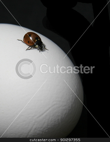 Lady Bug Adventure stock photo, A lady bug is crawling on an egg, isolated on a black background by Tyler Olson