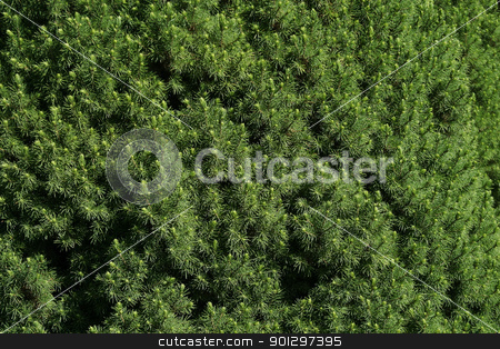 Green Bush texture stock photo, Green hedge of evergreen trees texture by Tyler Olson