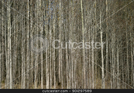 Tree Texture stock photo, Tree texture image in the forest by Tyler Olson