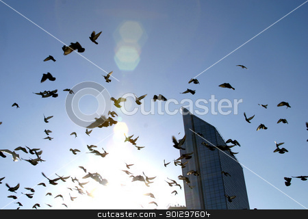 Freedom stock photo, Birds flying into the sun by Tyler Olson