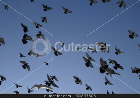 Freedom stock photo, Birds flying into the sun by Tyler Olson