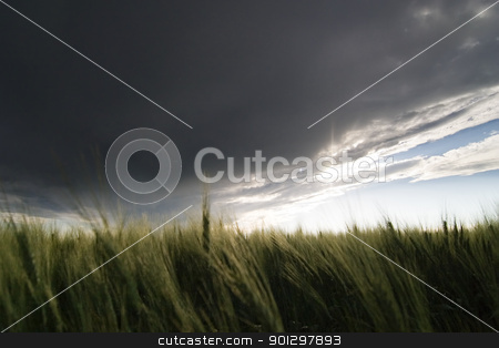 Wheat Field stock photo, Prairie Wheat Field looking into the sun on a cloudy stormy day by Tyler Olson