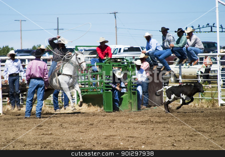 Calf Roping stock photo, Calf Roping at the Herbert Rodeo by Tyler Olson