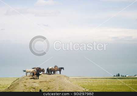 King of the Hill stock photo, Horses gathered on a mound in a field by Tyler Olson