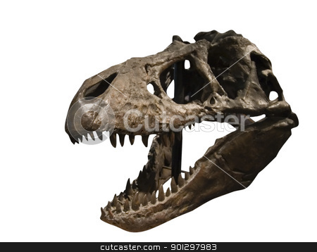 Tyrannosaurus Rex Skull stock photo, Tyrannosaurus Rex Skull at the T Rex Discovery center, in Eastend, Saskatchewan, Canada by Tyler Olson