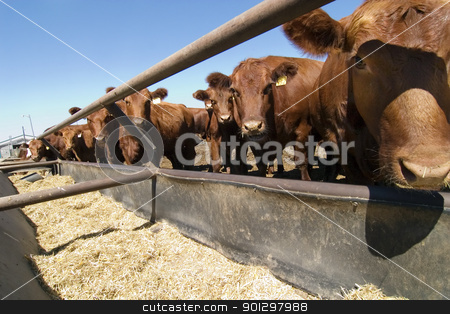 Feeding Bunks stock photo, Feeding bunks on a farm in Saskatchewan by Tyler Olson