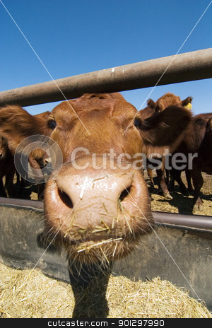 Feeding Bunks stock photo, Feeding bunks on a farm in Saskatchewan by Tyler Olson
