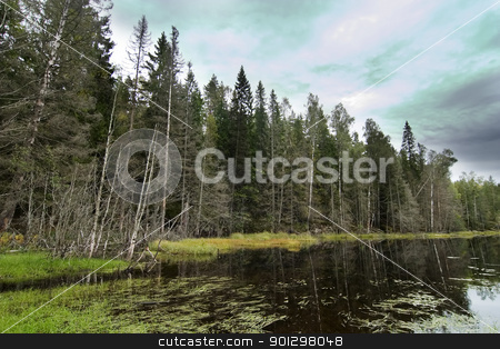 Forest Marsh stock photo, Marsh in the Oslo forest. by Tyler Olson