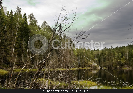 Marsh stock photo, Dead trees and other living things in a marsh near Oslo, Norway by Tyler Olson
