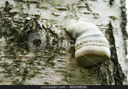 Tree Fungus stock photo, Detail of a fungus growing on the side of a tree by Tyler Olson